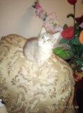 Котята. Фото 4.