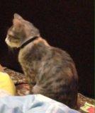 Кошка. Фото 3.