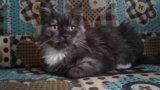 Кошка в добрые руки. Фото 1.