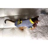 Одежда для cats & dogs. Фото 3.