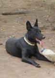 Собака. Фото 2.