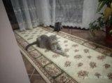 Кошка. Фото 2.