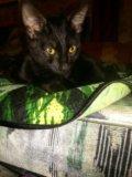 Кот в добрые руки. Фото 2.