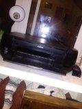 Притор ксерокс. Фото 1.