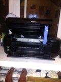 Притор ксерокс. Фото 2.