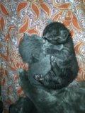 Котики. Фото 1.