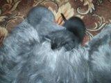 Котики. Фото 2.