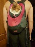 Переноска для собаки. Фото 2.