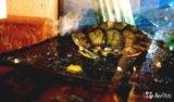 Красноухая черепаха + аквариум. Фото 1.