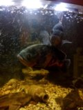 Рыбы. Фото 2.