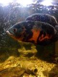 Рыбы. Фото 3.