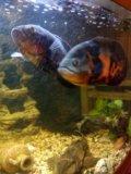 Рыбы. Фото 4.