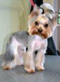 Стрижка собак. Фото 1.