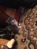Отдам котёнка. Фото 1.