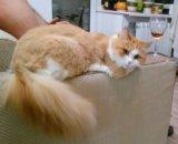 Кошка рада бесплатно. Фото 1.