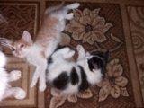 Котята в хорошие руки. Фото 3.