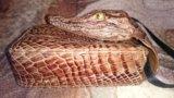 Портсигар из кожи крокодила. Фото 2.