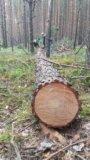 Лес кругляк. сосна. Фото 1.
