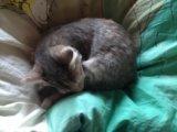 Кошка. Фото 1.