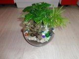 Флорариум. Фото 2.