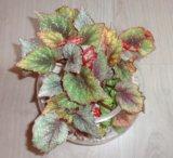 Флорариум. Фото 3.