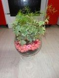 Флорариум. Фото 1.