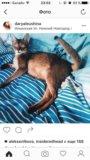 Котики 😻 породистые абиссины. Фото 1.