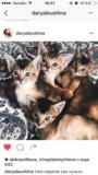 Котики 😻 породистые абиссины. Фото 3.