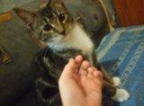 Срочно отдам котенка. Фото 2.