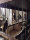 Птицы. Фото 1.