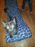 Котёнок в дар. Фото 2.