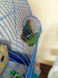 Попугаи неразлучники. Фото 2.