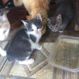 Котята ищут доброго хозяина. Фото 1.