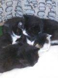 Котята в добрые руки. Фото 2.