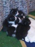 Котята в добрые руки. Фото 4.