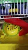 Клетка для джунгарика хомячка. Фото 3.