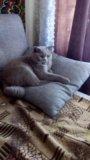 Котик на вязку. Фото 2.