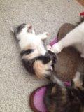 Кошечки в очень добрые руки. Фото 4.