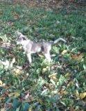 Sos пропал щенок. Фото 1.