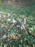 Sos пропал щенок. Фото 2.