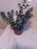 Живое дерево с мелкими листочками. Фото 2.
