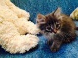 Отдам котёнка в добрые руки. Фото 1.