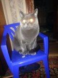 Кот. Фото 1.