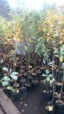 Плодовые деревья. Фото 1.