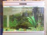 Аквариум вместе с рыбками. Фото 1.