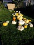 Тыква, хэллоуин. Фото 1.