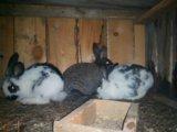 Продам кроликов. Фото 2.