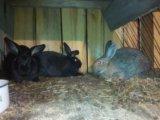 Продам кроликов. Фото 3.