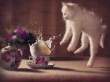Продам кошку котенка сколько хотите. Фото 1.