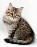 Продам кошку котенка сколько хотите. Фото 2.